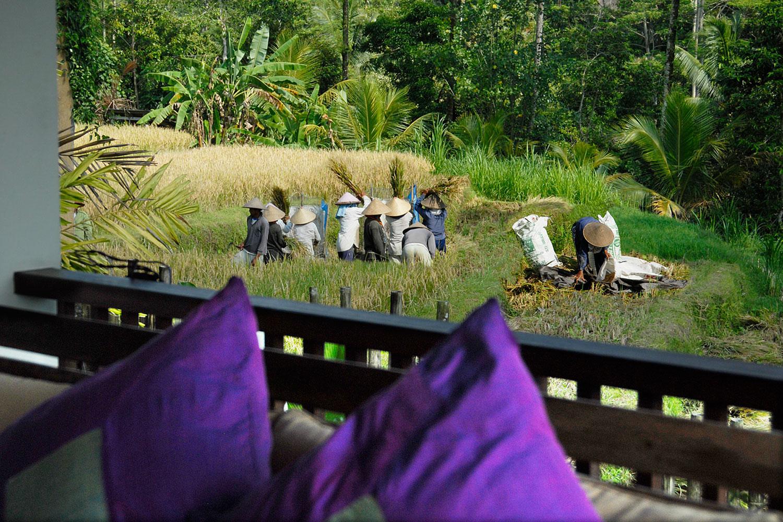 villabayad_ubud_garden_ricefield_view